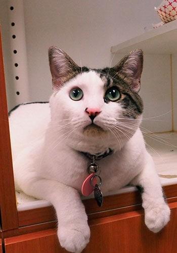 Cat Boarding Tacoma