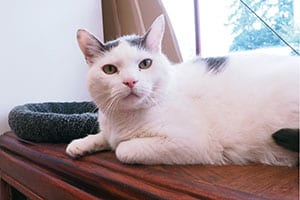 Frequently Asked Questions, Tacoma Cat Hospital